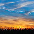Maize at Sunset by Kenneth Keifer