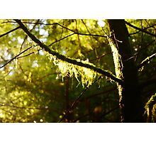 green moss Photographic Print