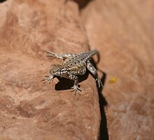 Lizard on a rock by stine1