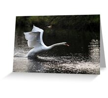 Swan Take off 2 Greeting Card