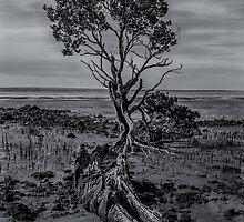 Lone Mangrove, Western Port Bay by Craig & Suzanne Pettigrew