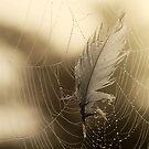 27.7.2013: Feather and Cobweb by Petri Volanen