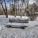 After the snow has fallen  by DreamCatcher/ Kyrah Barbette L Hale
