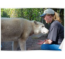 Petting a Wolf Poster