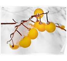 Frosty Yellow Berries  Poster