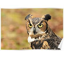 Great Horned Owl ( Bubo Virginianus) 1 Poster