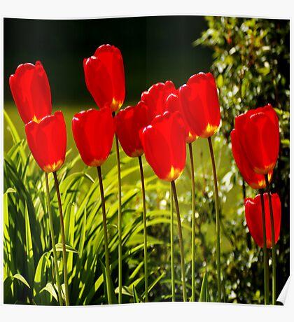 tulip impressions (square) Poster