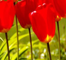 tulip impressions (square) Sticker
