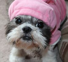 Shih Tzu in the Pink by smithmansell