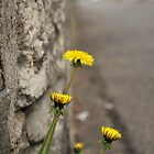 Flowers by wall by WeridofWerid