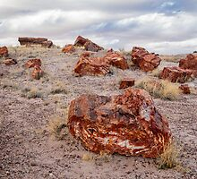 Petrified Forest by Robert Kelch, M.D.