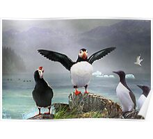 puffin pano norway Poster