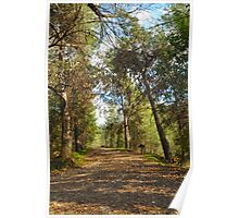 Nature Trail Poster