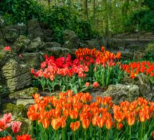 Tulip Rocks  Sticker