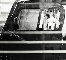 Wet Dogs by DaneDeaner