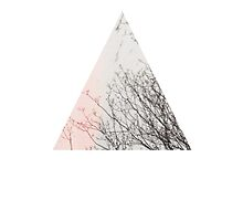triangular  by cehill