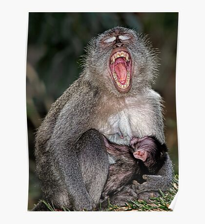 Mother and Baby suckling - Macaque Poster