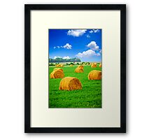 Golden hay bales in green field Framed Print