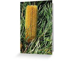 golden bottlebrush Greeting Card