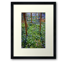 Spring meadow with blue flowers glory-of-the-snow Framed Print