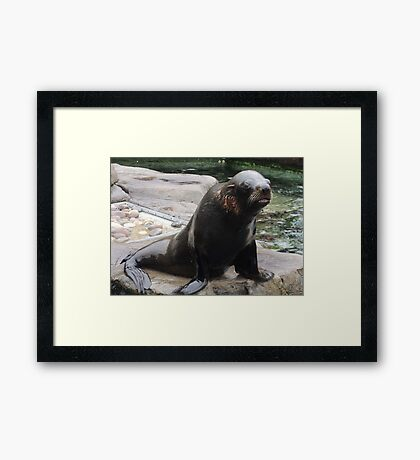 You Gonna Throw That Fish Or What?  Framed Print