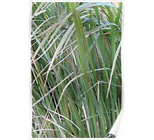 blady grass Poster
