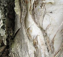 paperbark at the park by Michaela Stephens