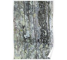 lichen on weathered post Poster