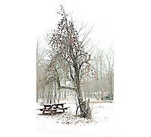 Apple tree Photographic Print