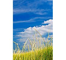Tall grass on sand dunes Photographic Print