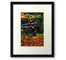 Fall forest and river Framed Print