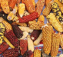 Varieties of Corn at the Market by rhamm