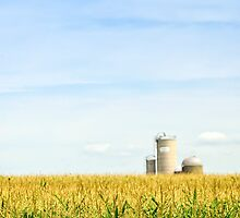Corn field with silos by Elena Elisseeva