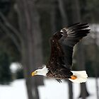 Fly Like an Eagle by CcoatesPhotos