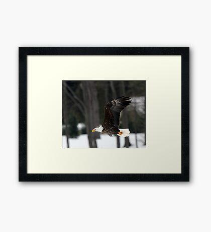 Fly Like an Eagle Framed Print