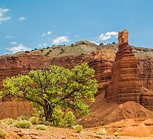 Desert Survivor - Capitol Reef NP by Kenneth Keifer