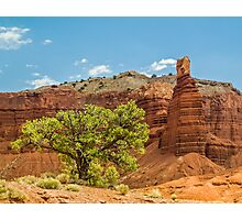 Desert Survivor - Capitol Reef NP Photographic Print