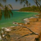 Horizontal tree at Noosa by Michael Matthews