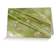 Water Drops on Grass Greeting Card