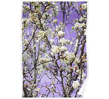 White Flowers Purple Sky Poster