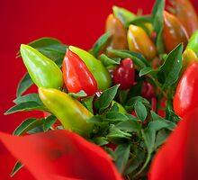 Red and green Chilli by Cédric Tourasse