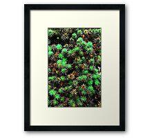 Rainforest Plant Framed Print