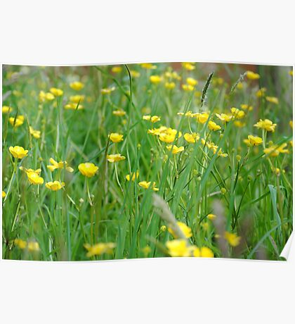 Green & Yellow Flowers Poster