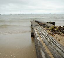 Beach Drift Wood by adampower