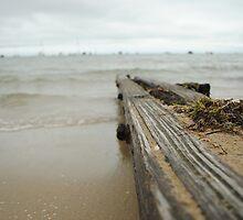 Beach Drift Wood by adampower