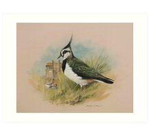 Lapwing at Blakeney, Norfolk Art Print