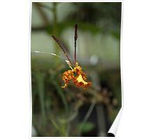 """Orchid """"Psychopsis Kalihi"""" Poster"""