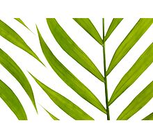 Contemporary Leaf Design Photographic Print