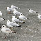 The Gulls by henuly1