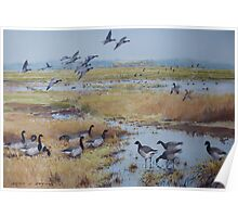 Brent Geese, Cley Marshes Poster